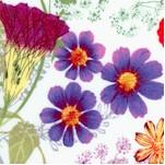 Verite - Pressed Wildflowers on Ivory