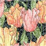 FLO-tulips-Y332