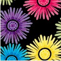 FLO-flowers-P777