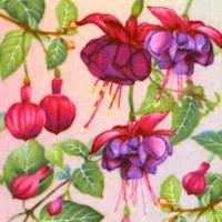 Gossamer Garden - Magnificent Fuchsia by Color Principle