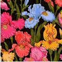 FLO-irises-P695