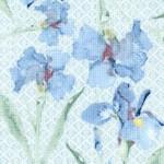 FLO-irises-W841