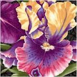 FLO-irises-X763