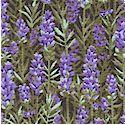 Farm Living - Field of Fragrant Lavender - BACK IN STOCK!
