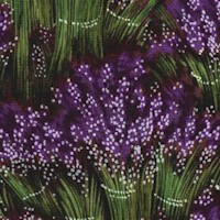 Lavender - Packed Bunches of Lavender