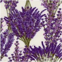 Bunches of Lavender on Cream