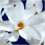 Floral Vignettes - The States - Volume 1 Magnolia