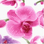 FLO-orchid-W926