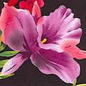 FLO-orchids-M182