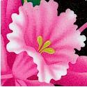 FLO-orchids-S1