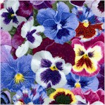 Lovely Pansies - Purple