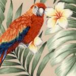 Island Paradise - Tropical Parrots and Cockatiels