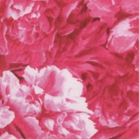Floral Vignettes - The States Volume 1 - Indiana Peony