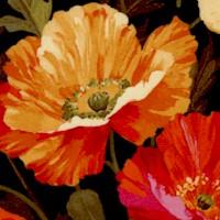 FLO-poppies-R88