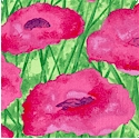 Bella Flora - Field of Pink Poppies