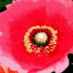 Bloom - Vibrant Poppies by Maria Kalinowski - LTD. YARDAGE AVAILABLE
