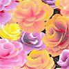 FLO-roses-K866