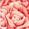 FLO-roses-P977