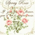FLO-roses-x63