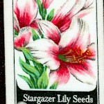 Everyday Favorites - Rows of Flower Seed Packets