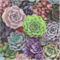 FLO-succulents-Z312