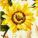 FLO-sunflowers-P704