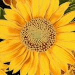 FLO-sunflowers-W287