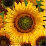 flo-SUNFLOWERS-x158