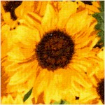 Fresh Market Flowers 2 - Bold Sunflowers