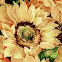 FLO-sunflowers-Z890