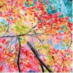 FLO-trees-Y4