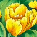 Color Profusion - Beautiful Tulips in Yellow by Susie Robbins