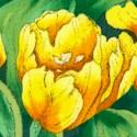FLO-tulips-885