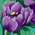 FLO-tulips-918