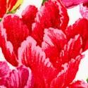FLO-tulips-S676