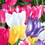 FLO-tulips-W449
