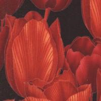 FLO-tulips-Z981