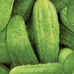 Food Festival - Packed Cucumbers - BACK IN STOCK!