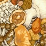 FB-mushrooms-W146