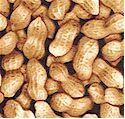 FB-peanuts-M697