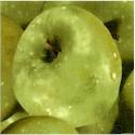 Farmer's Market - Packed Green Apples