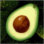 FB-avocado-X987