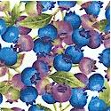 Fresh Blueberries on Cream