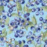 FB-blueberries-U829