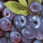 Farmer John's  Organic Blueberries