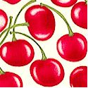 Berry Delicious - Tossed Luscious Cherries on Cream
