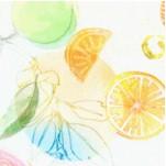 FB-citrus-Y151