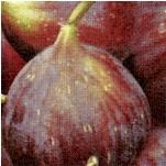 FB-figs-Y81