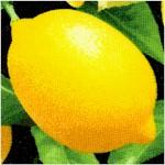 Fresh Squeezed - Lemons on Black