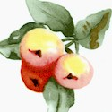 In Love with Nature - Tossed Peaches by Susan Branch